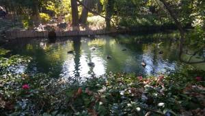 湧水や星渓園の浮寝鳥
